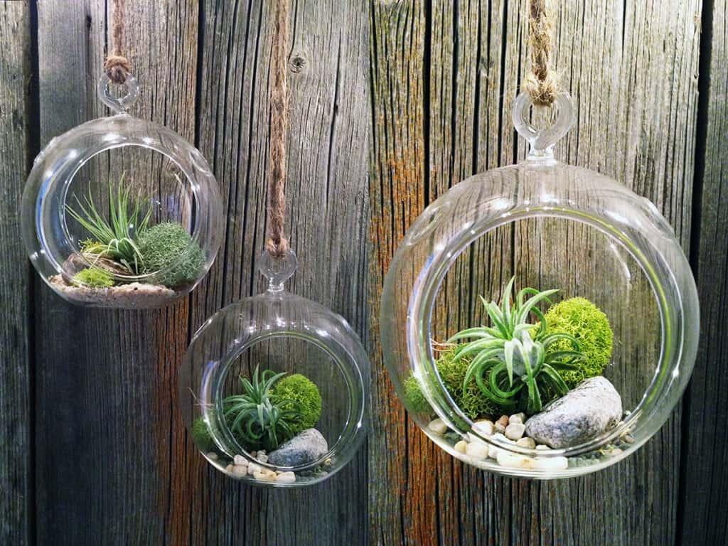 cách trồng cây trên tường