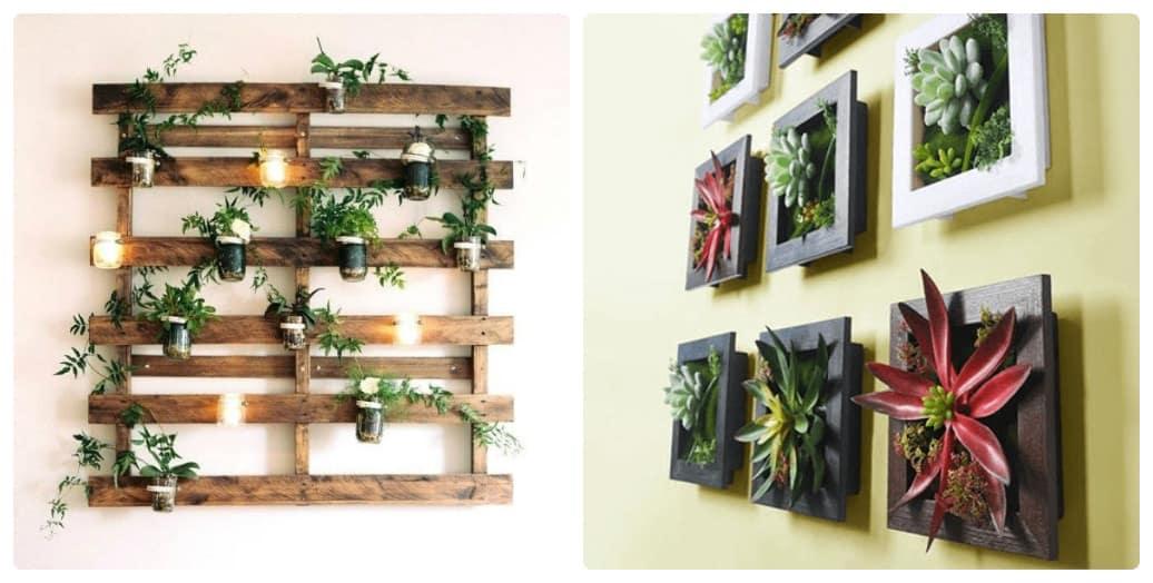 cách trồng cây trong túi treo tường