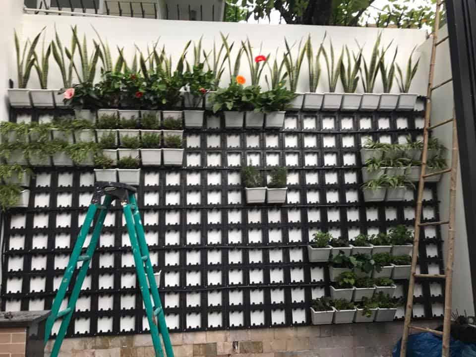 cách trồng cây trên tường nhà