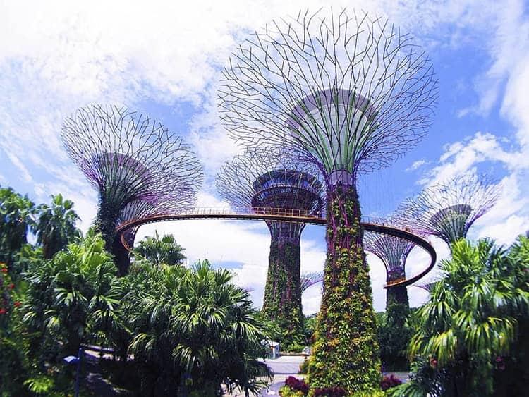 cảnh quan công viên cây xanh