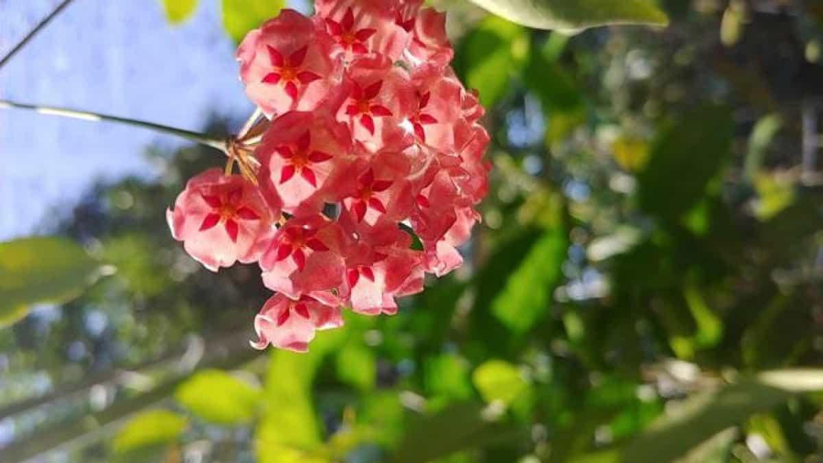 cây hoa ưa bóng mát