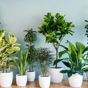 loại cây trồng trong nhà tốt cho sức khỏe