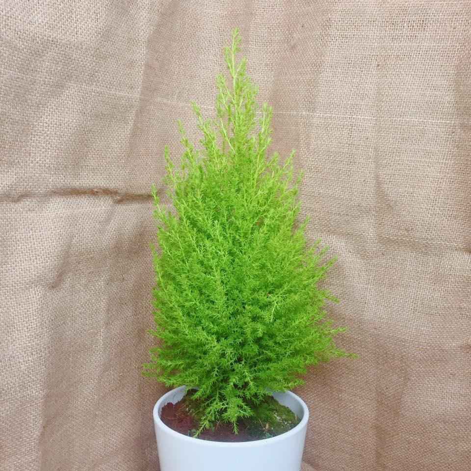 mua bán cây xanh cho cảnh quan