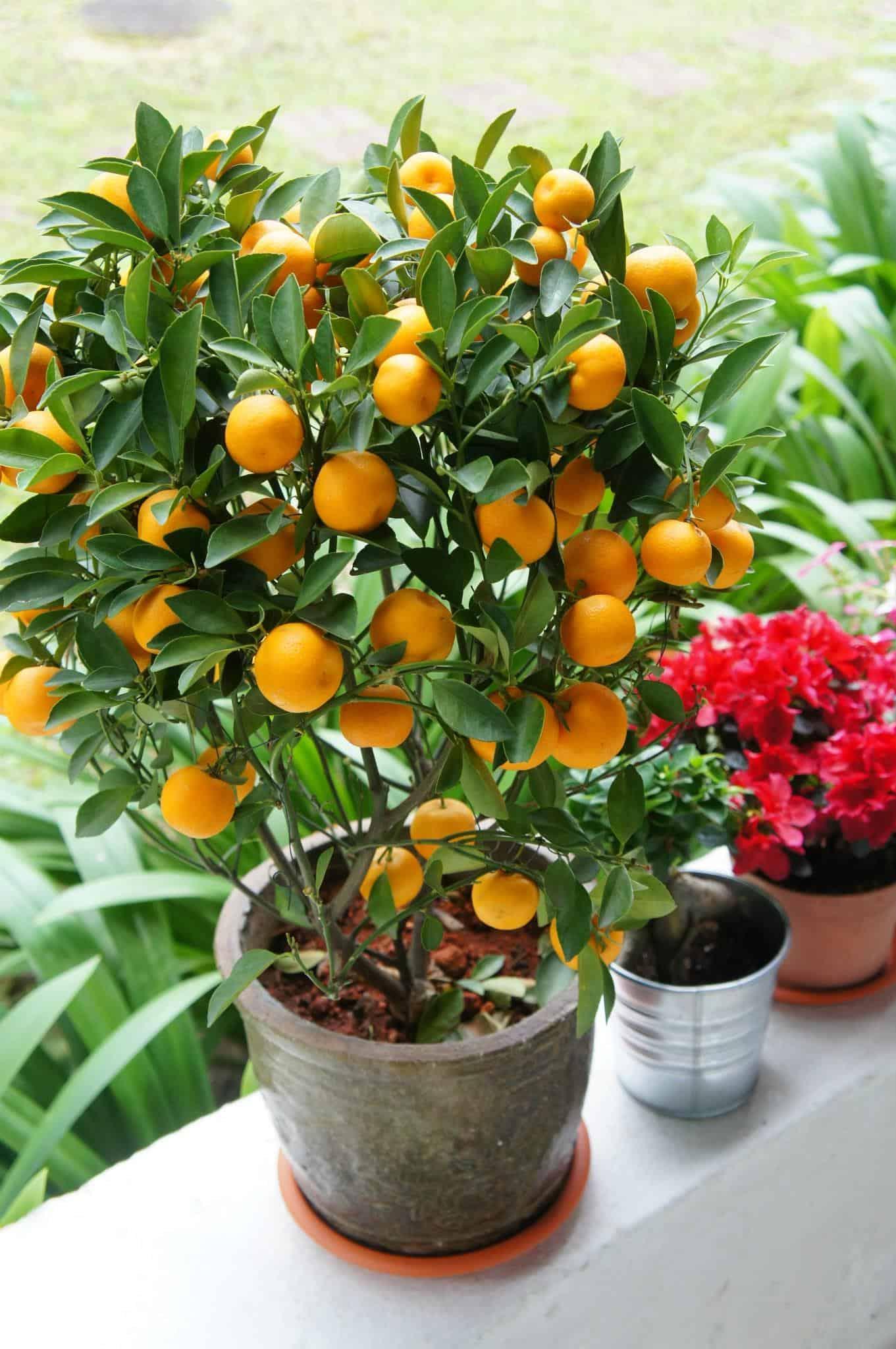 nên trồng cây gì trong vườn nhà