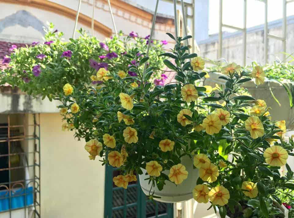 nhà hướng tây nên trồng cây gì trước nhà