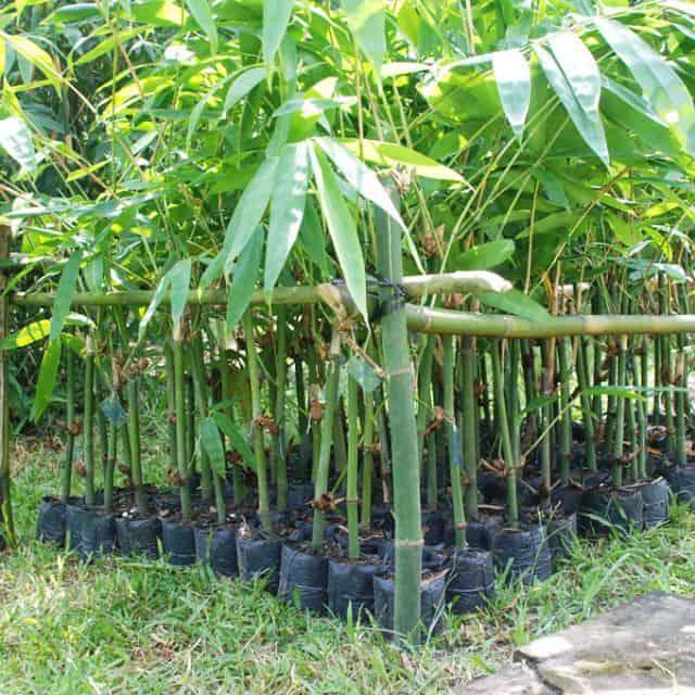 nhà hướng tây trồng cây gì cho mát