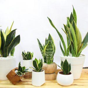 tuổi canh tuất nên trồng cây gì