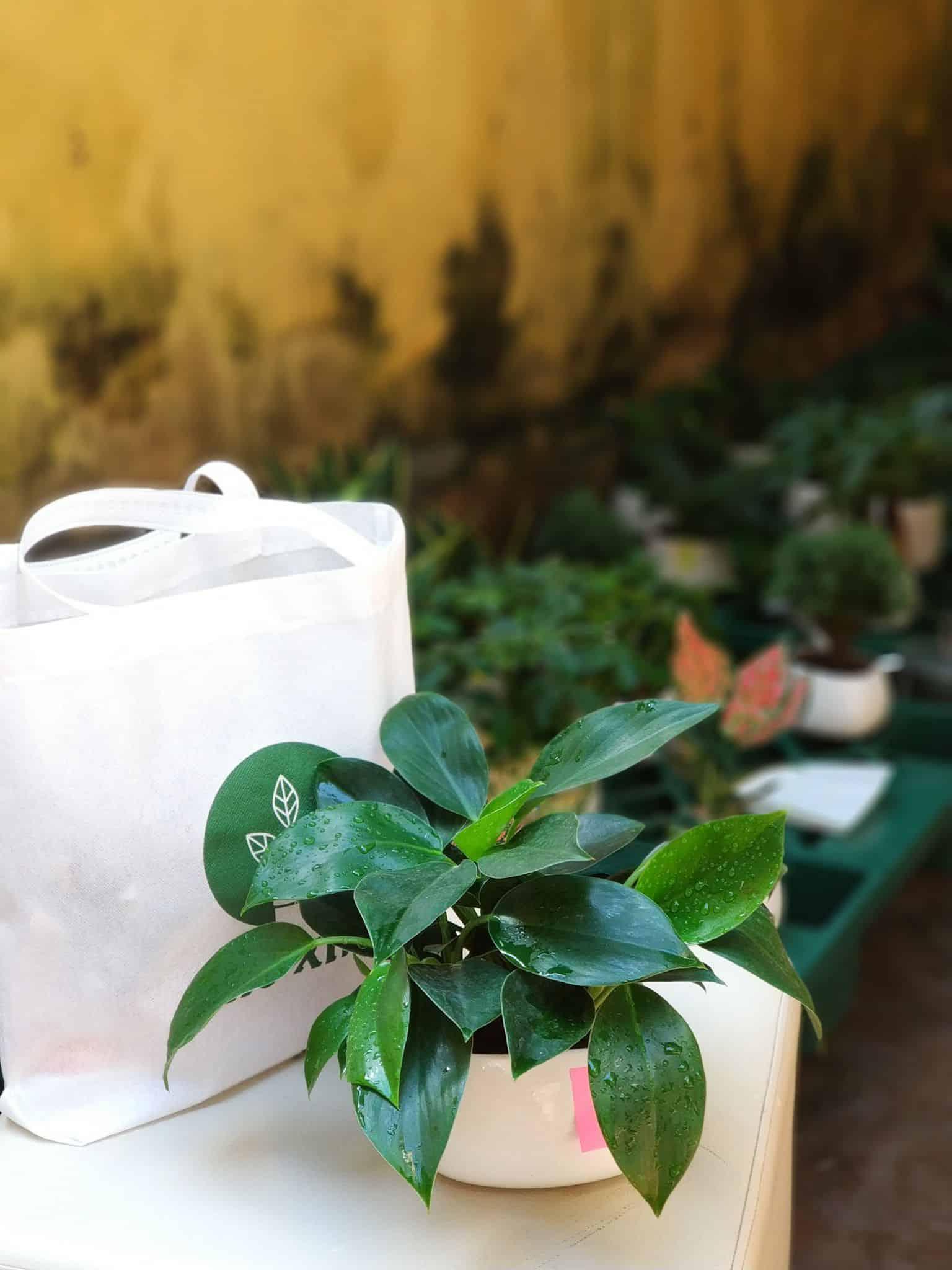 tuổi canh tuất nên trồng cây gì trong nhà