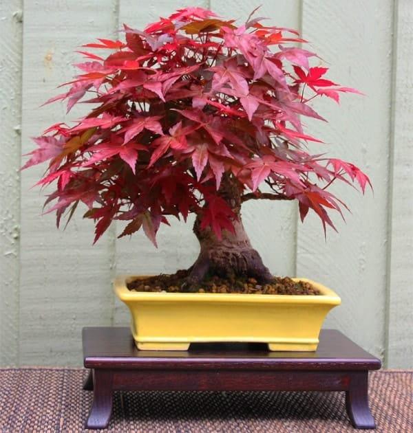 tuổi giáp thìn nên trồng cây gì trong nhà