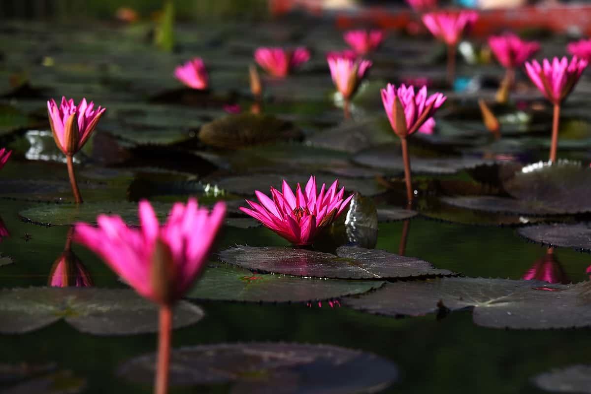 cây thủy sinh dễ tìm trong tự nhiên