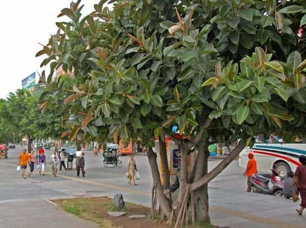 cây cảnh chịu nắng hạn tốt