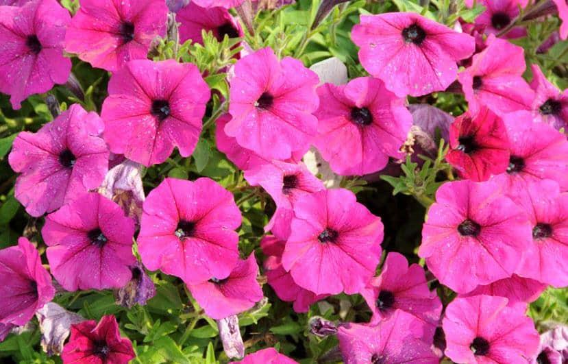 cây hoa cảnh đẹp dễ trồng