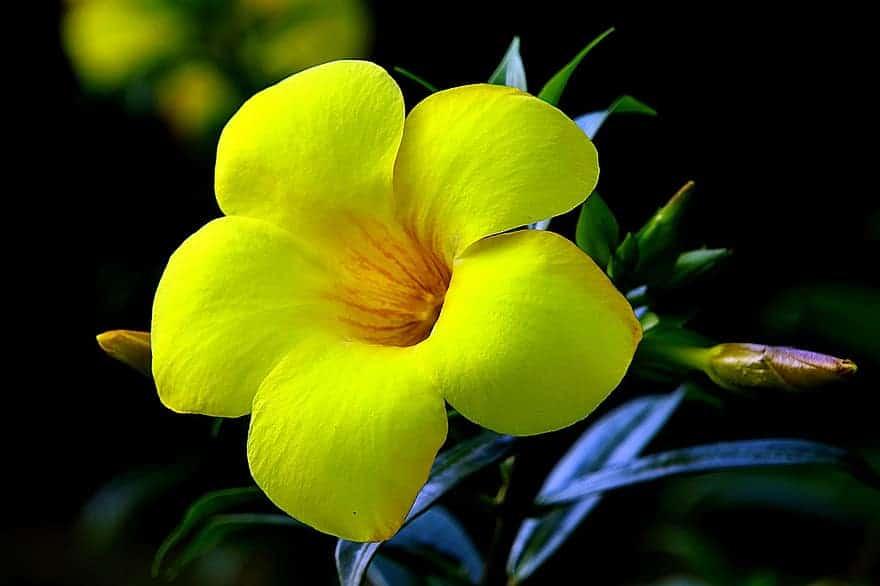 các loại hoa dễ trồng trong vườn
