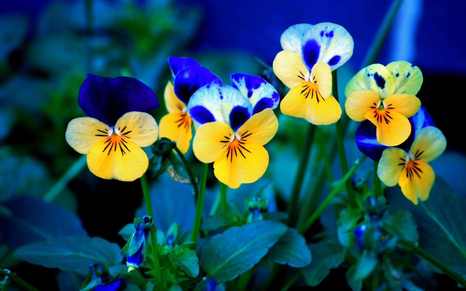 hoa cảnh đẹp dễ trồng