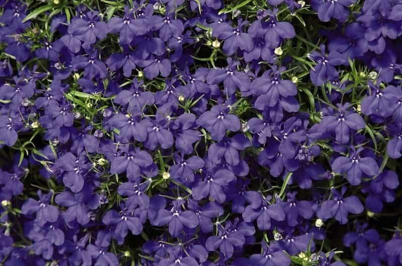 cây hoa đẹp dễ trồng