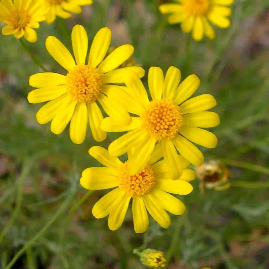 Cây hoa cảnh dễ trồng