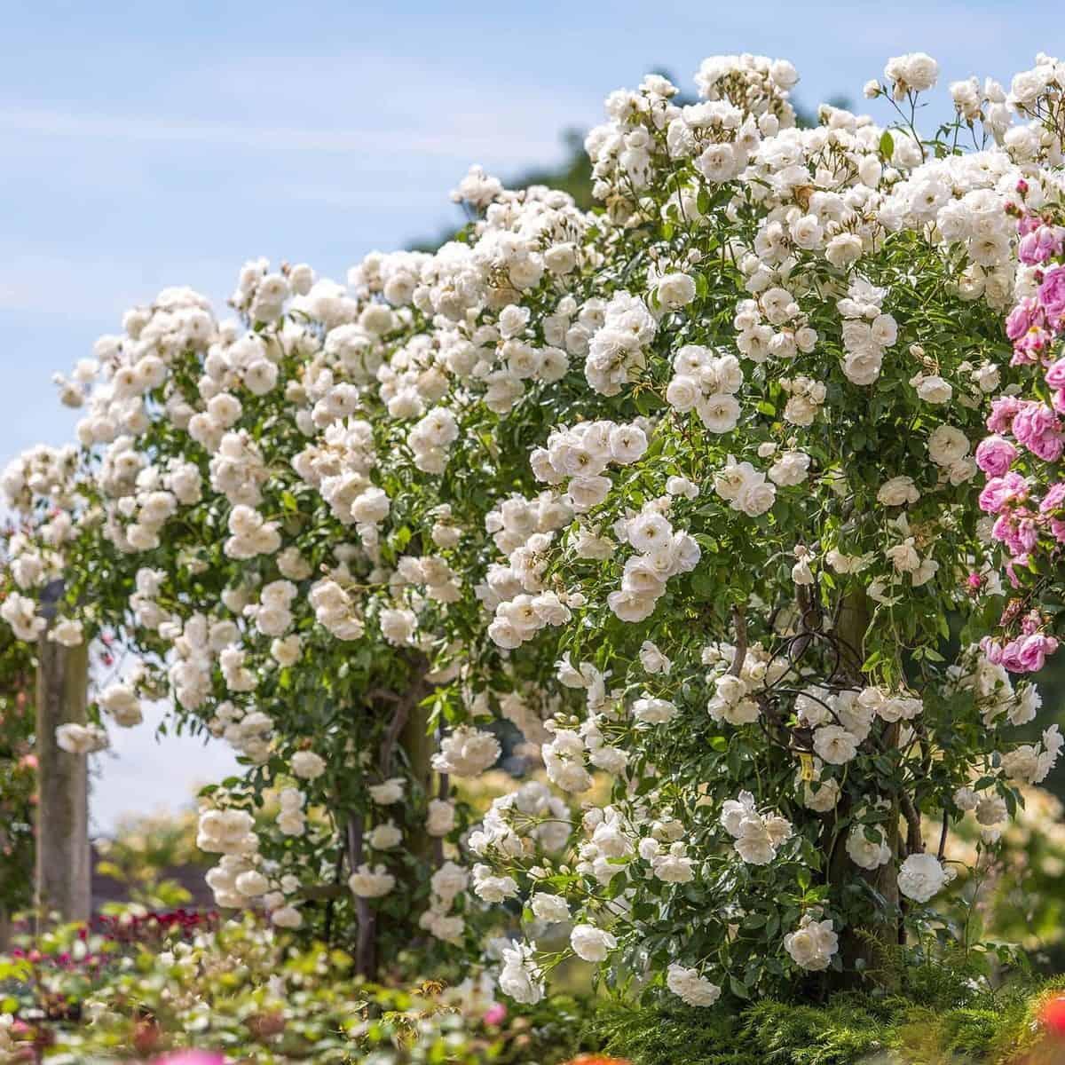 Các loài hoa dễ trồng trong nhà