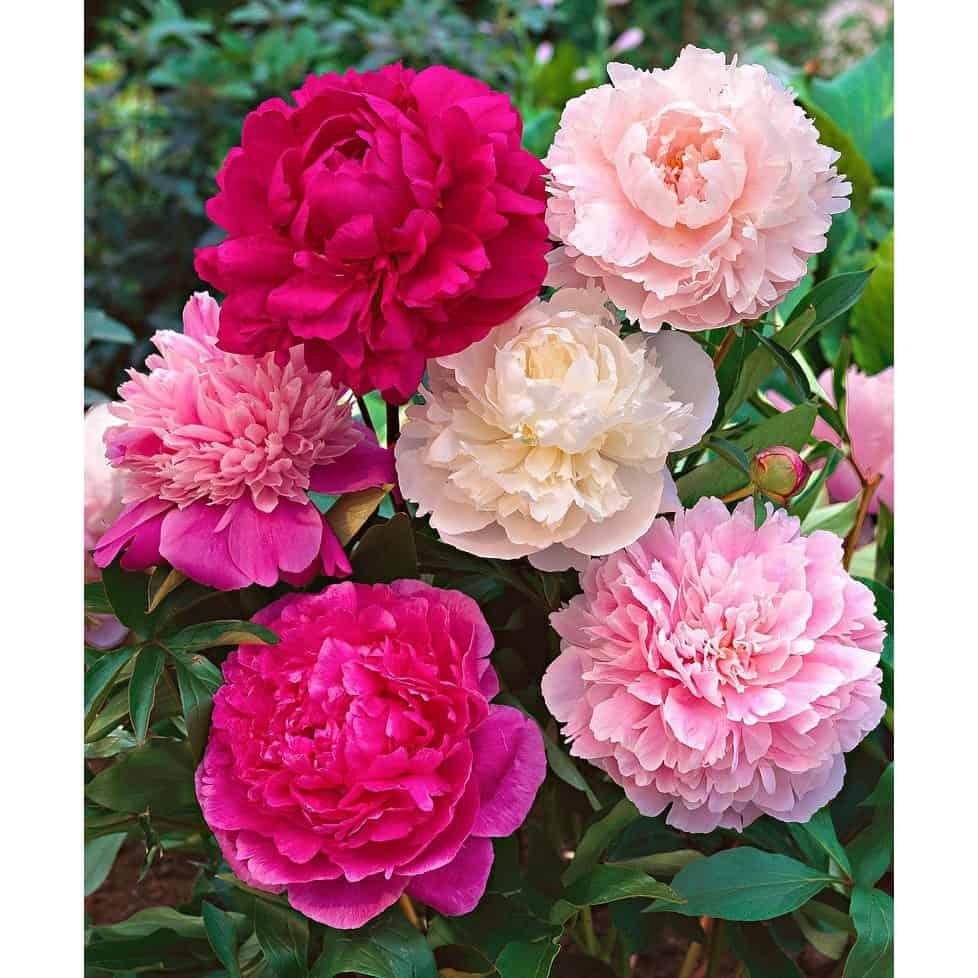 hoa đẹp dễ trồng