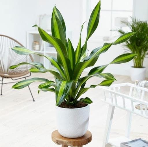 tuổi mậu thân nên trồng cây gì trước nhà t