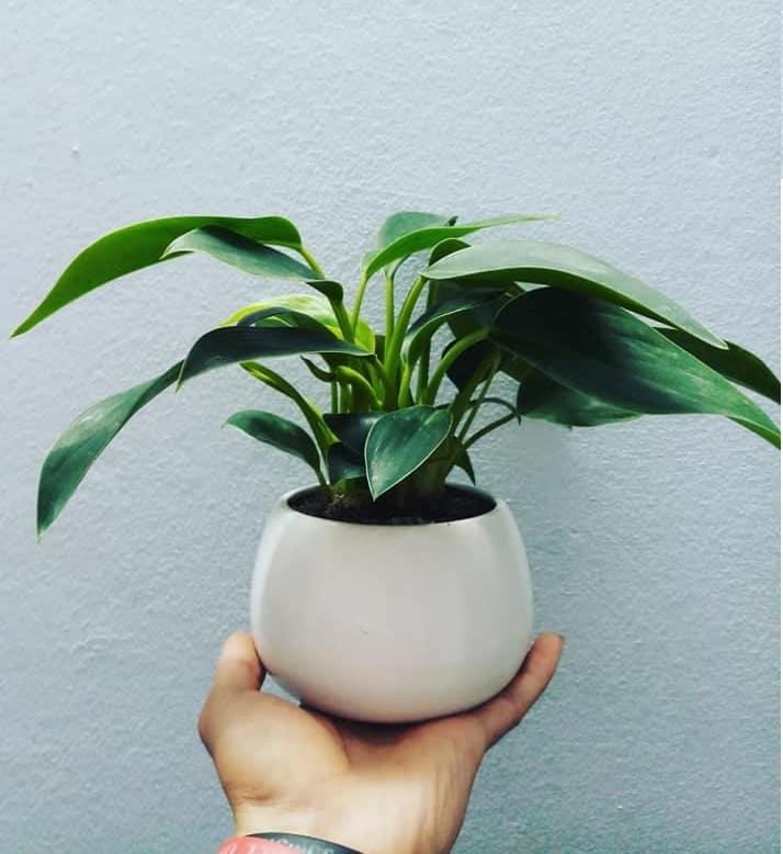 tuổi mậu thìn trồng cây gì