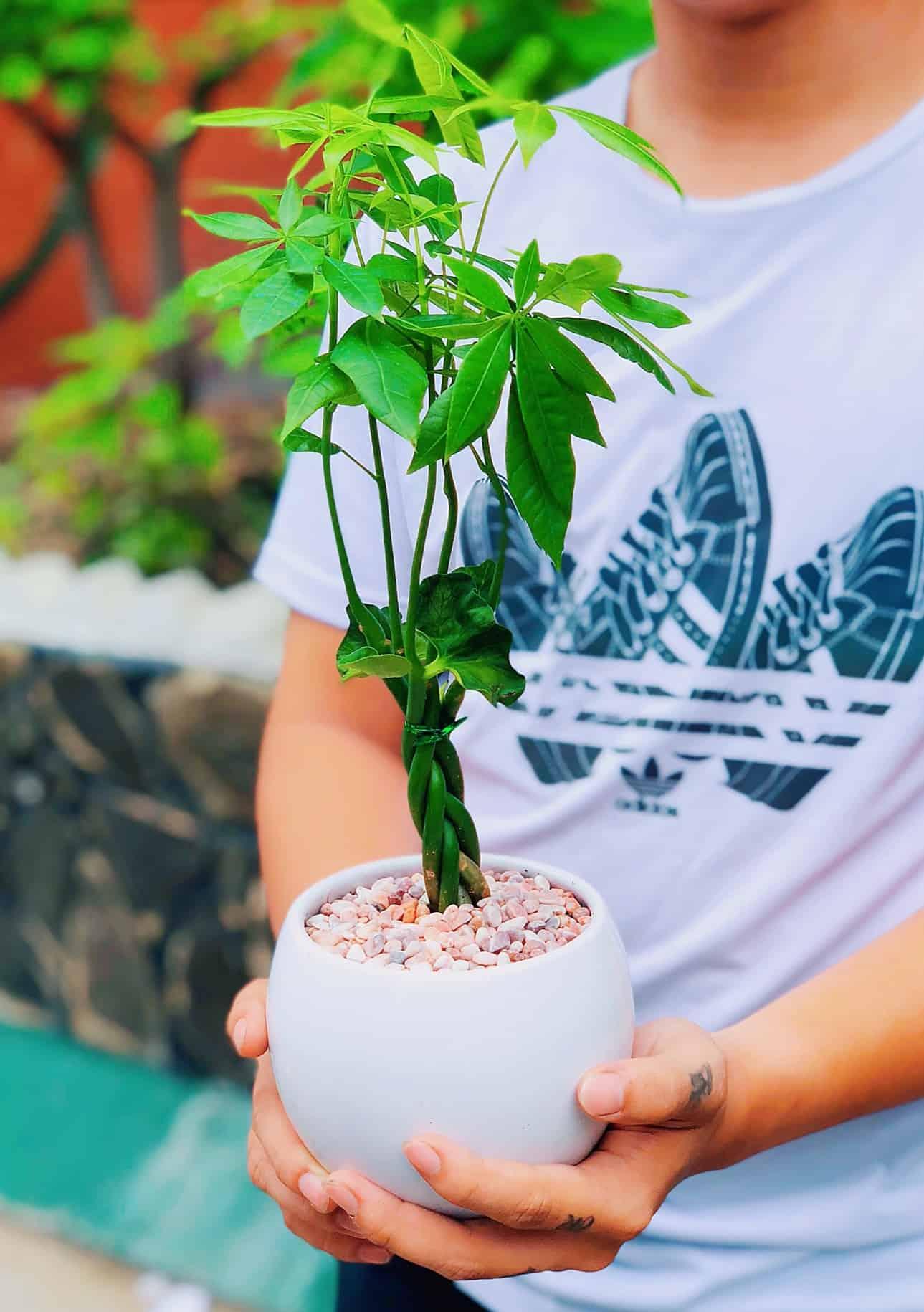tuổi mậu thìn trồng cây gì tốt