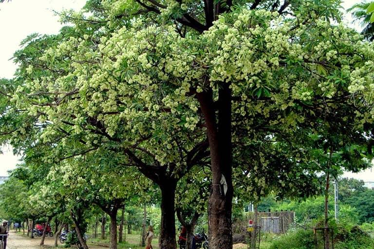 cây xanh trồng công viên