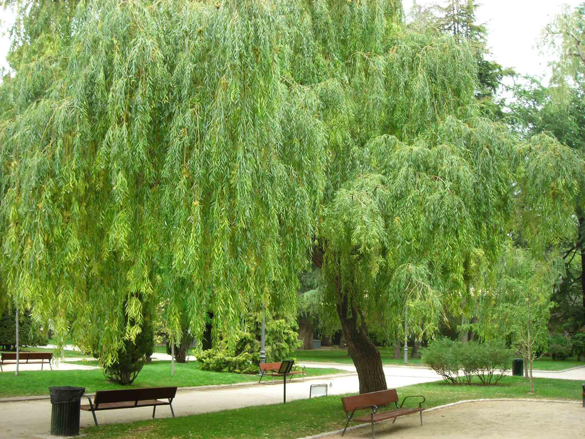 các loại cây ở công viên