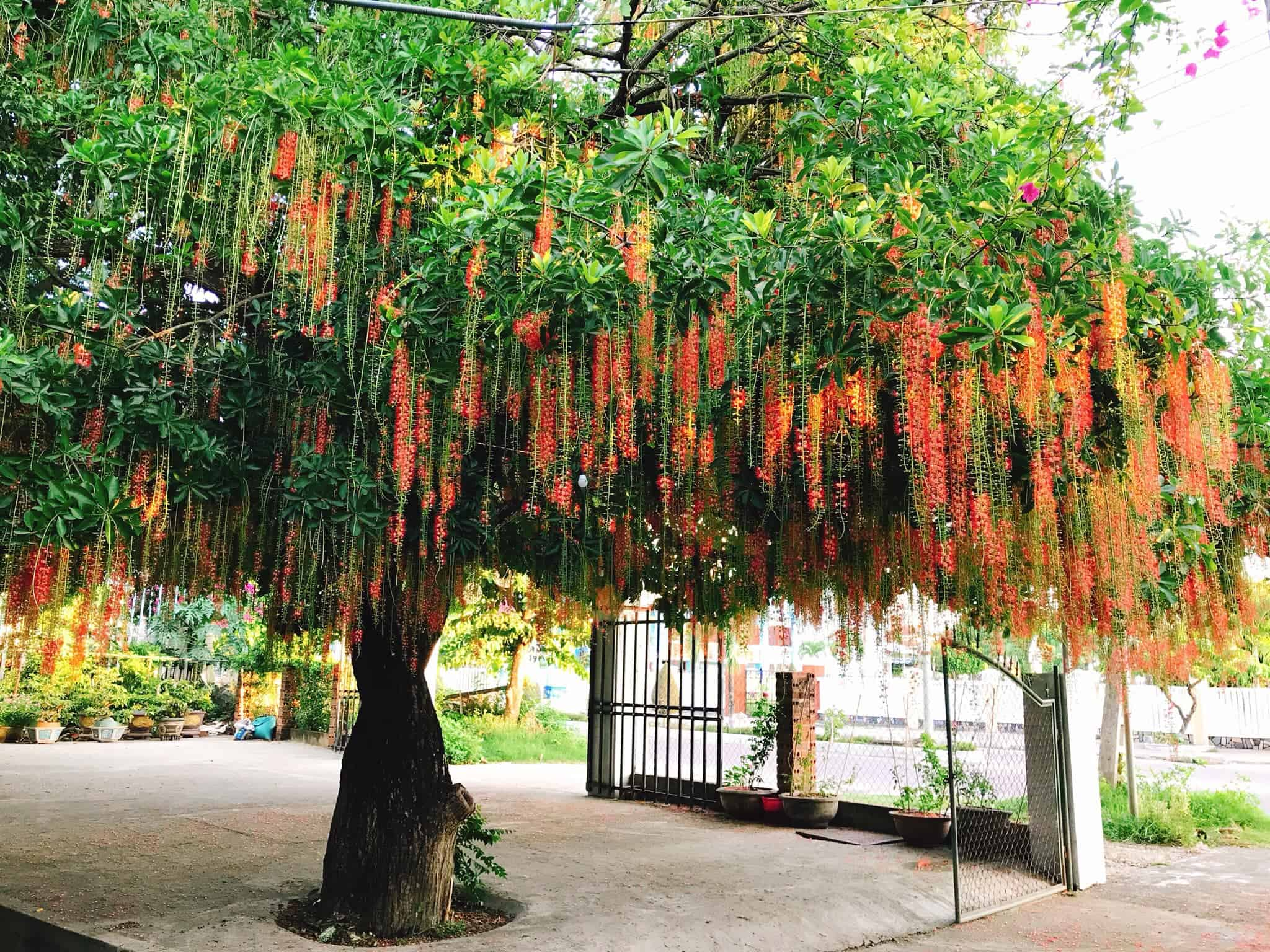 các loại cây xanh trồng trong công viên