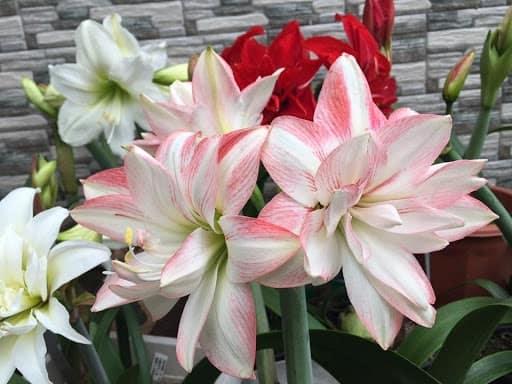 cây hoa trồng trong nước đẹp