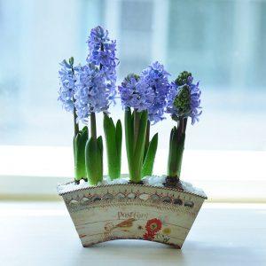 cây trồng trong nước có hoa