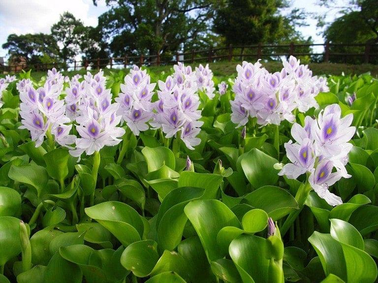 cây hoa trồng được ở trong nước