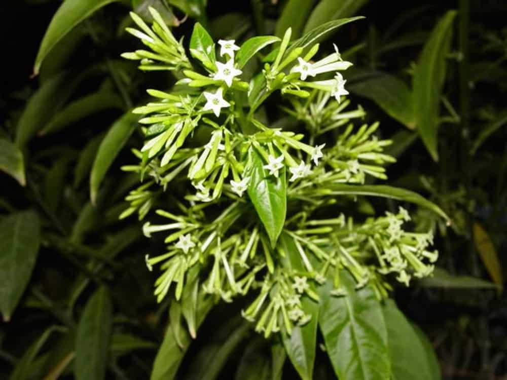 hoa thơm trồng ban công