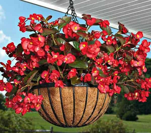 hoa thích hợp trồng ban công