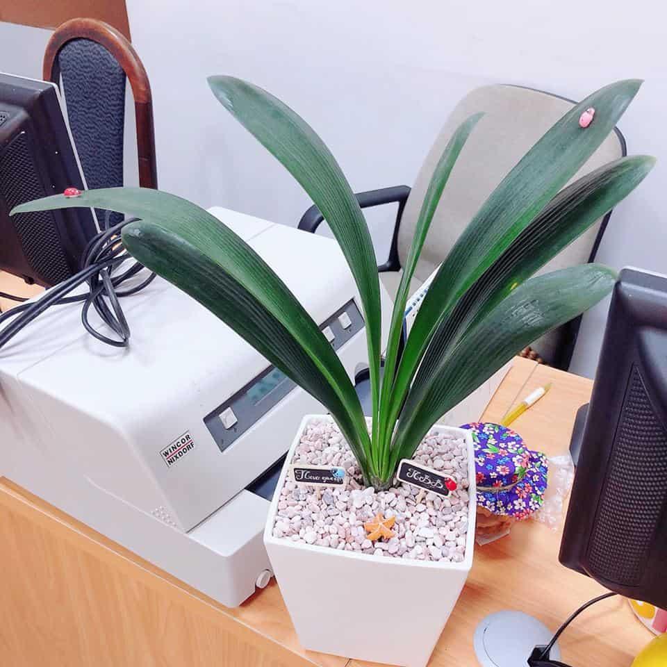 tiểu cảnh văn phòng