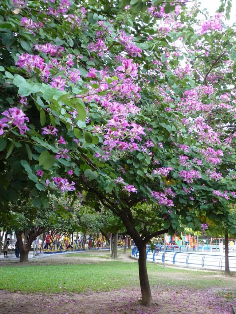 các loại cây trồng công viên