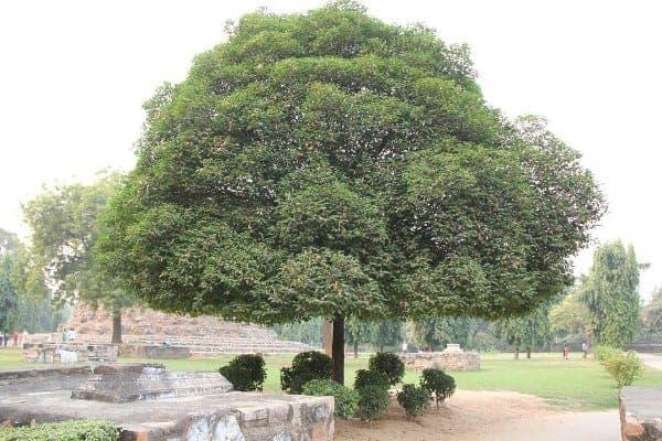 cây trồng công viên