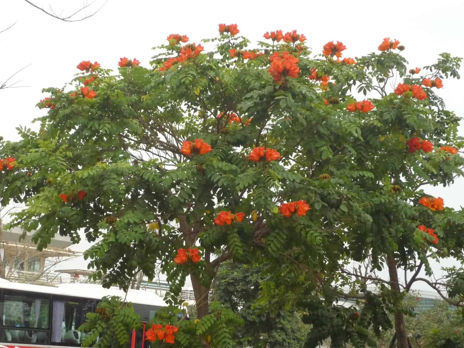 các loại cây trông công viên