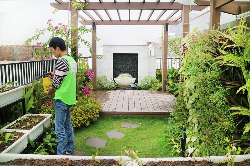 Cách bố trí cây xanh trước nhà