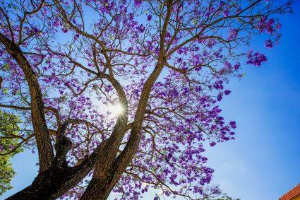 Trồng cây lấy bóng mát