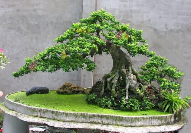 Phong thủy cây cần thăng