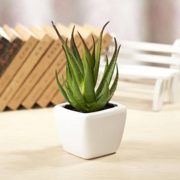 trồng cây nha đam trong nhà có tốt không