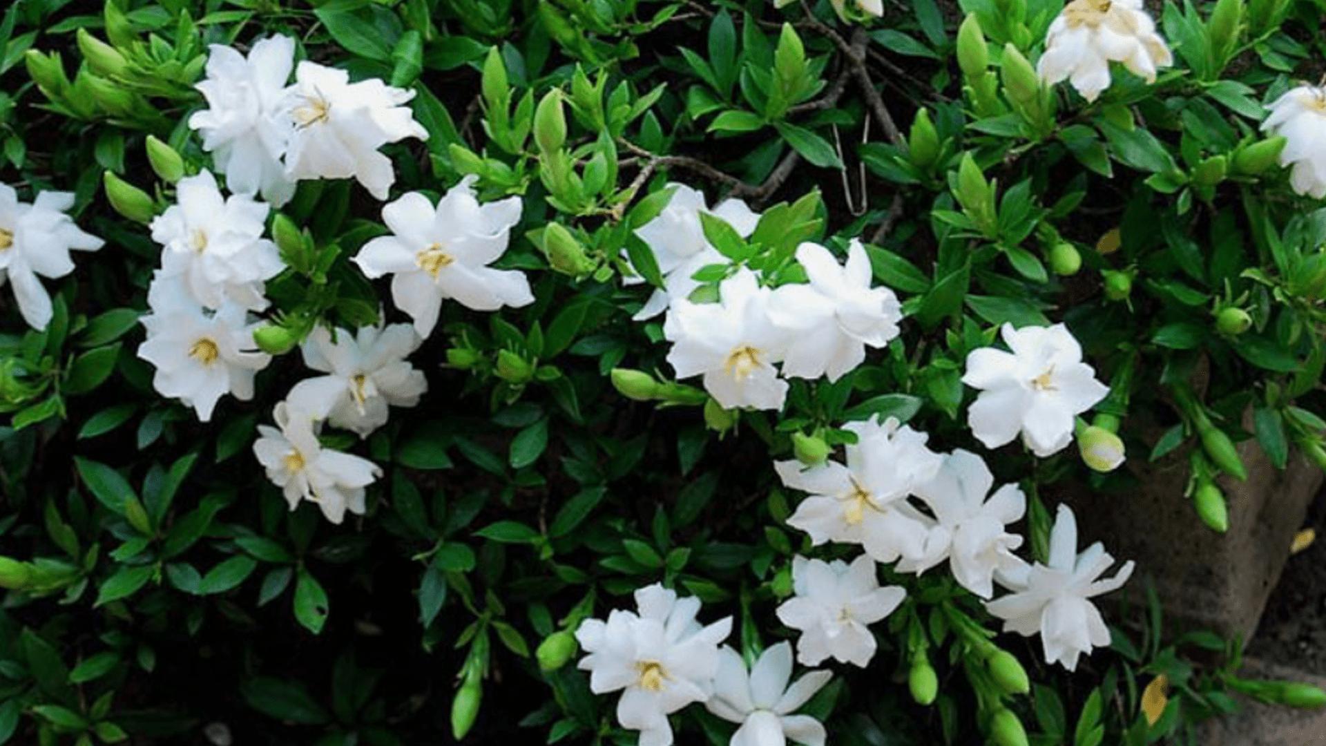 hoa trồng ban công quanh năm