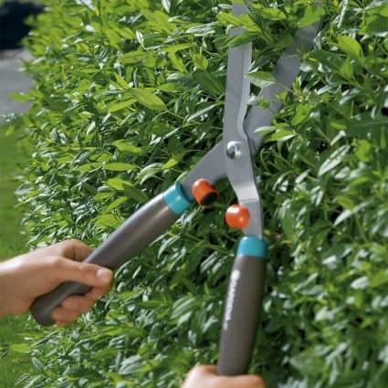 cách trồng cây hoa nhài trong chậu