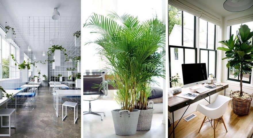 Cho thuê cây cảnh nội thất văn phòng