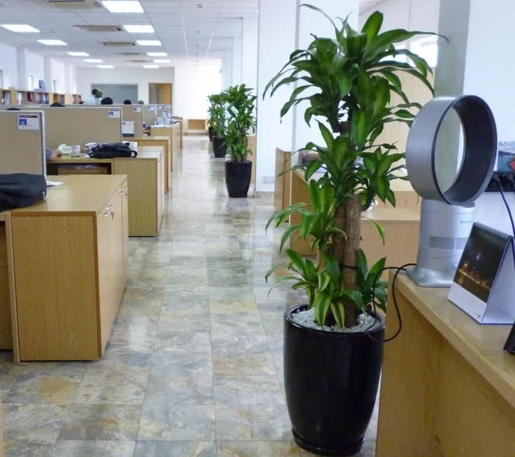 Công ty cho thuê cây xanh văn phòng tphcm
