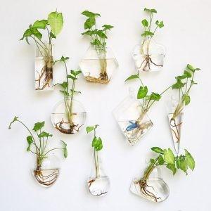 các loại cây trồng sát tường