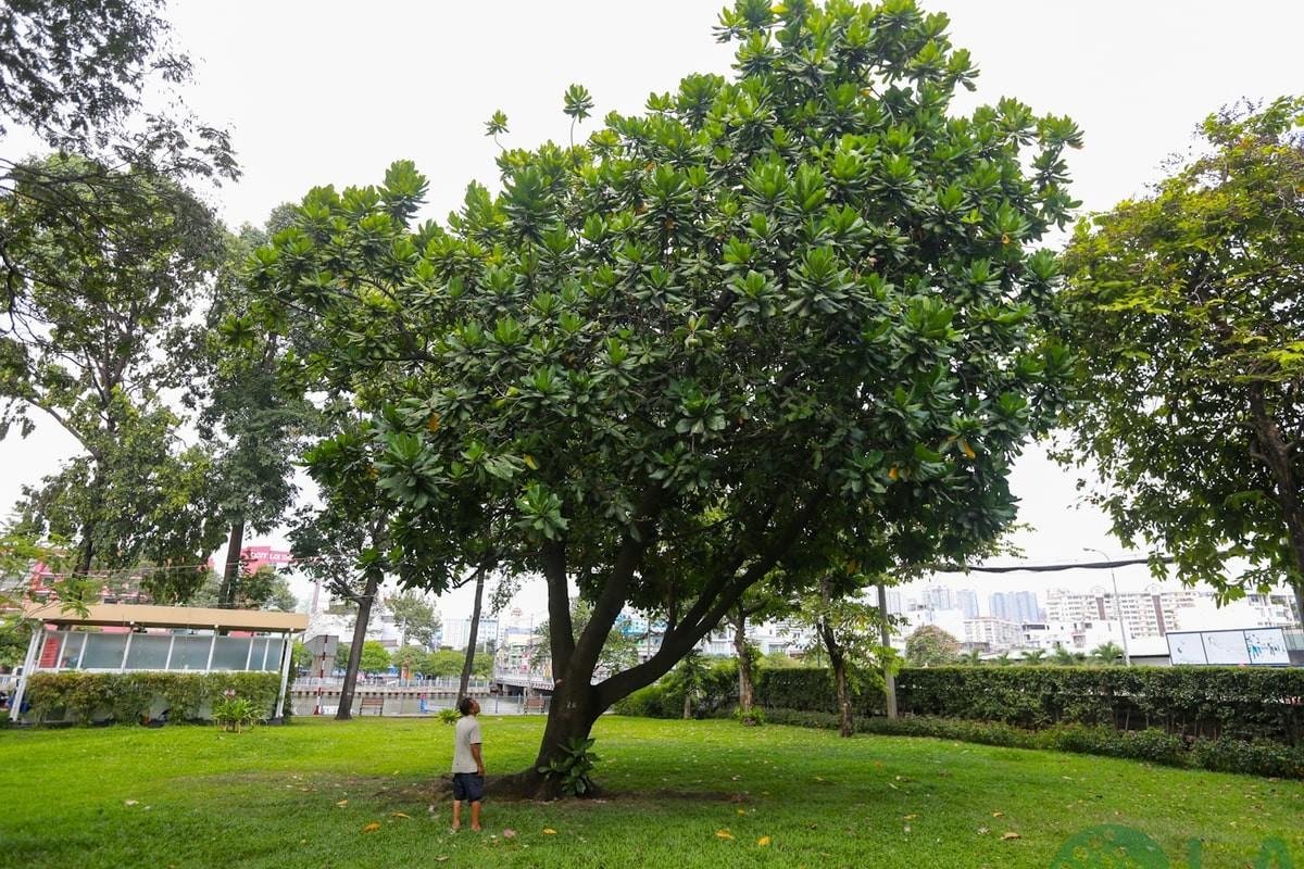 các loại cây xanh đô thị