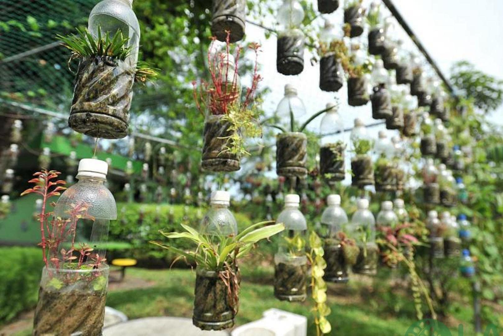 làm chậu trồng cây từ chai nhựa
