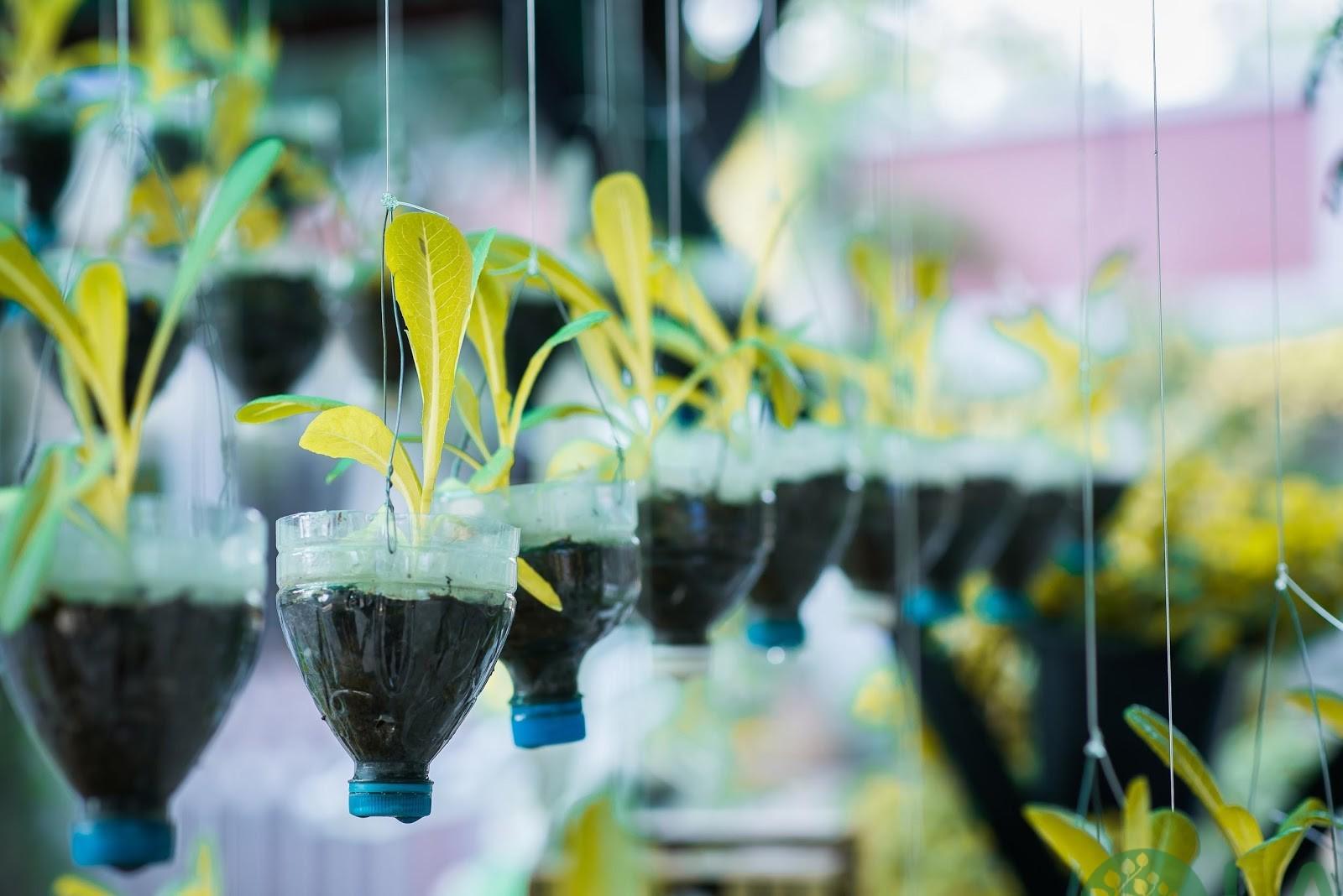 cách làm chậu cây từ chai nhựa