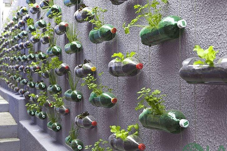 cách làm chậu trồng cây từ chai nhựa